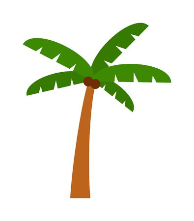 natural arch: Green coconut palm isolated leaf on white background. Palm isolated vector and green palm isolated. Palm isolated green plant nature and tropical palm isolated. Botany coconut stem growth tree.