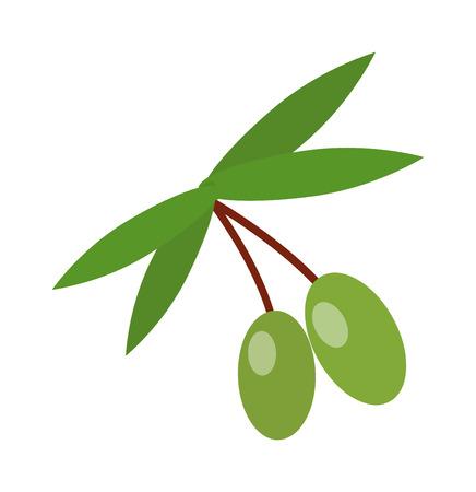 green olive: Olive branch with green olives isolated. Green olive branch vector and nature olive branch. Organic oil fruit olive branch and tree plant fresh natural olive branch. Design vegetable ingredient food.