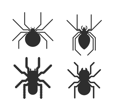 poisonous insect: Vector poisonous spiders. Poisonous spiders arachnid danger isolated nature and fear insect poisonous spiders. Poisonous spiders leg phobia dangerous scary. Poisonous spiders horror poison. Illustration