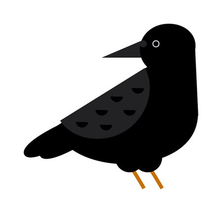 widespread: Black raven and wild nature raven. Raven flat cartoon wildlife bird and raven flight ornithology blackbird. Carrion crow raven with wide-spread wings black beak nature feather wild dark bird vector.