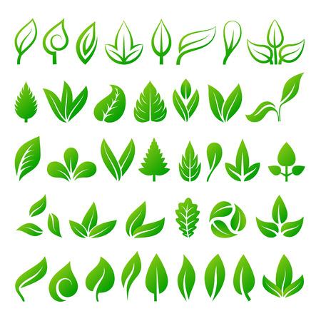 clover leaf shape: Set of green leaves eco design elements. Leaf icons vector illustration friendly nature elegance symbol. Decoration flora leaf icons set. Natural element ecology symbol green organic set. Illustration