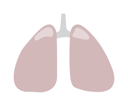 bronchial: Human lungs icon vector illustration. Health care lungs icon breathe shape biology, anatomy organ. Respiratory pulmonary lungs icon bronchial organ design science healthcare element. Illustration