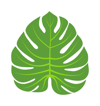 Vector tropical leaves Green tree leave. Natural green leaf isolated. Leaf element floral color garden art. Tropical leave tree element. Natural green tropical leave flat style