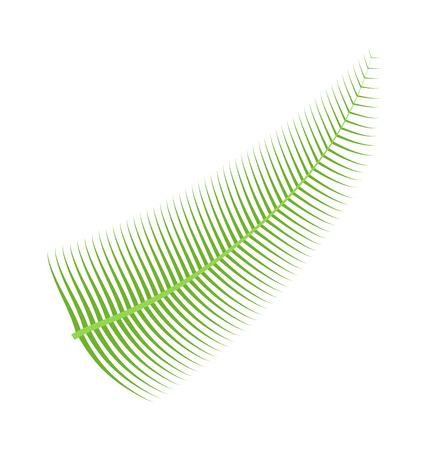 flat leaf: Palm leaf on white background. Palm leaf summer and nature green color plant foliage. Green palm leaf bright decoration and design natural colorful flat leaf.