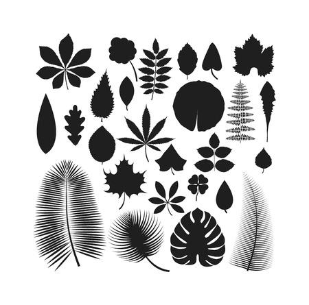 Vector de hojas tropicales licencia verde del árbol. aislado hoja verde natural. elemento de la hoja floral del color del arte del jardín. elemento de árbol tropical licencia. estilo plano licencia tropical verde natural