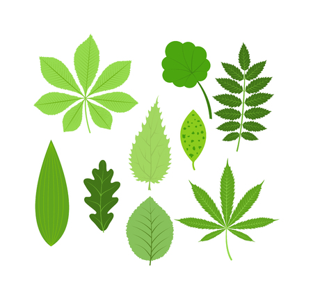 Vector Tropische Blätter Grüner Baum Verlassen. Natürliche Grüne ...
