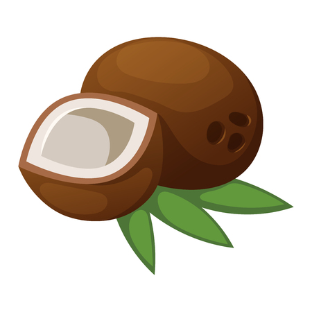 husks: Half coconut isolated on white and natural coconut tropical food. Coconut food and coconut exotic brown food with sweet milk fruit. Break nutrition natural ingredient palm diet coconut food.