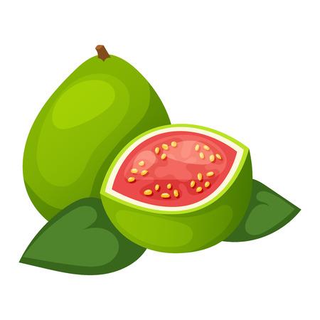 Mango fruit delicious ingredient vitamins isolated on white background. Cut gourmet object mango fruit healthy exotic vegetarian food. Tasty pulp nature half mango fruit fresh juicy ripe vector. Illustration