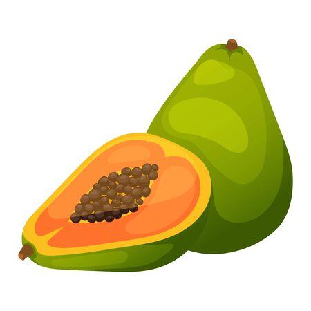 fragrant: Fresh papaya fruit and cut one slice on white background. Vector papaya fruit orange exotic tasty cut dessert. Healthy color slice seed raw papaya fruit nature vitamins fragrant thailand.