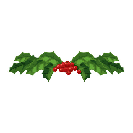 ilex: European christmas berry holly ilex aquifolium leaves and fruit. Floral branch red xmas winter decor christmas berry symbol. Vector decorative holly christmas berry leaf traditional ornament symbol. Illustration