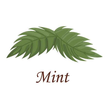 Fresh raw mint leaves isolated on white background. Food ingredient leaf spearmint, fresh nature plant mint leaf. Seasoning scented smell mint leaf organic natural herbal ingredient vector. Illustration