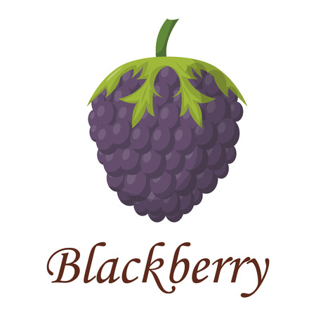 dewberry: Blackberry with leaves vector illustration. Healthy organic juicy blackberry plant raw summer ingredient. Delicious nature blackberry bright natural vitamin eating vegetarian berry vector.