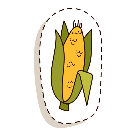 Corn cobs vector illustration. Healthy grain maize vegetable cob corn. Yellow agriculture farm ingredient corn. Nature harvest golden popcorn kernels sweet vegetarian sweet corn seed.