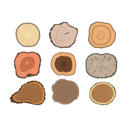 rings on a tree cut: Wood slice texture wooden circle cut tree material. Set of tree slices wood trunk section natural timber. Slice of tree trunk. Aging round tree slices lumber pattern ring isolated bark.