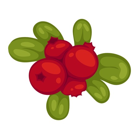 group therapy: Wild northern berries lingonberry cranberry. Healthy macro sweet ingredient bright tasty juicy plant. Pharmacy ripe cranberry dessert nature color freshness medicine stem. Illustration