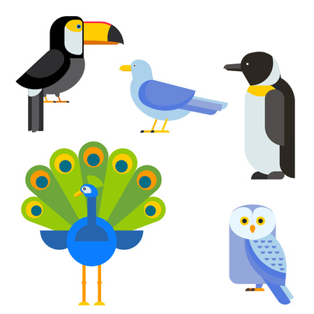 pigeon owl: Birds vector set. Colorful wildlife nature collection. Cartoon wing flying animal cute drawing silhouette. Wild fly color bird character illustration.