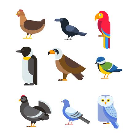 鳥のベクトルのセット。カラフルな野生動物の自然のコレクション。漫画の翼飛行動物かわいい図面シルエット。野生のハエ色鳥キャラ イラスト。