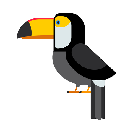 Cartoon toucan vector isolated birds