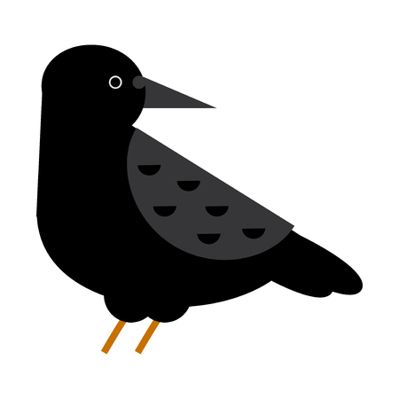 Carrion crow raven vector illustration. Illustration