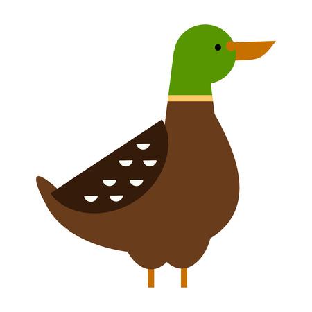 Drake duck vector illustration Illustration