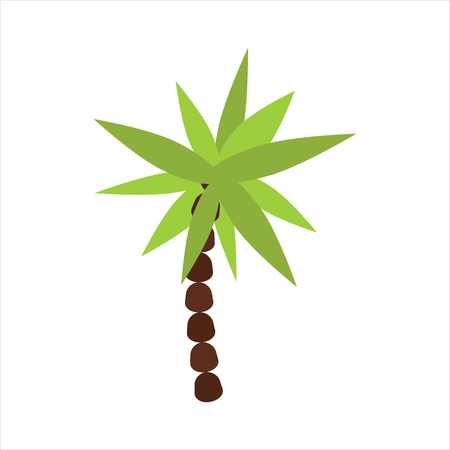 palmetto: Palm tree isolated vector. Illustration