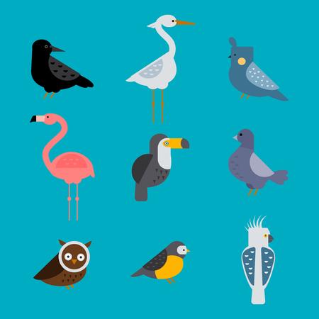 pigeon owl: Birds vector set illustration isolated