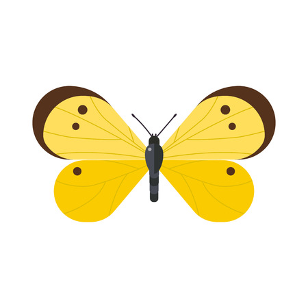 pieris: Cute butterfly vector isolated on white