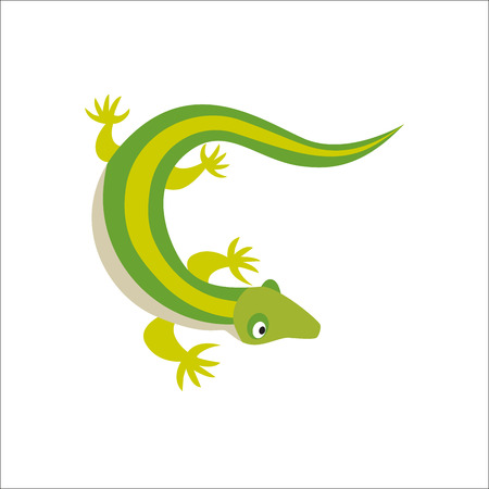 Chinese water dragon lizard vector illustration. Illustration