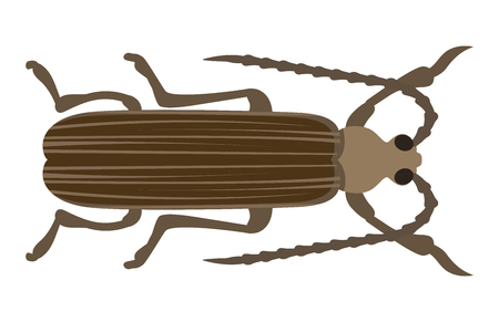 bark: Insect icon flat isolated vector illustration. Illustration