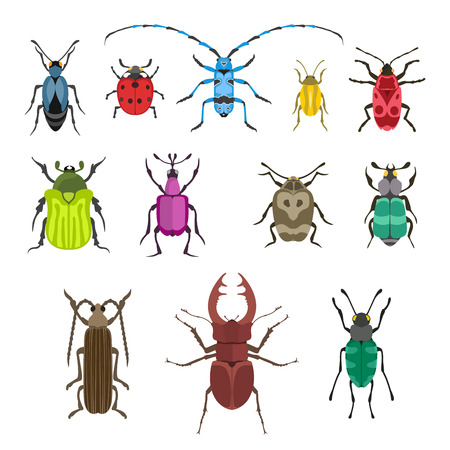 Insect icon flat isolated on white background. Wildlife spider grasshopper or mosquito cockroach animal illustration.