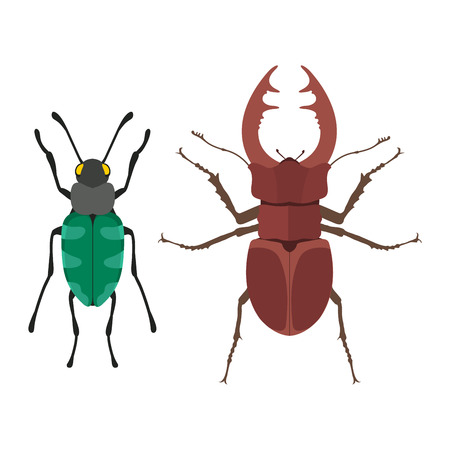 Insect icon flat isolated vector illustration. Stock Photo