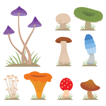 Mushrooms for cook food and poisonous nature meal vegetarian healthy autumn edible and fungus organic vegetable raw ingredient vector illustration. Ilustracja