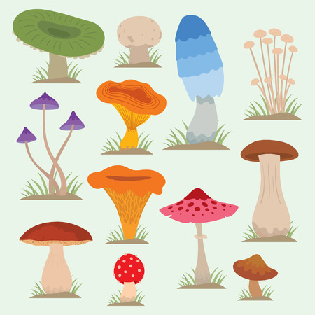 Mushrooms for cook food and poisonous nature meal vegetarian healthy autumn edible and fungus organic vegetable raw ingredient vector illustration. Ilustrace