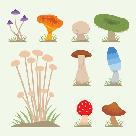 Mushrooms for cook food and poisonous nature meal vegetarian healthy autumn edible