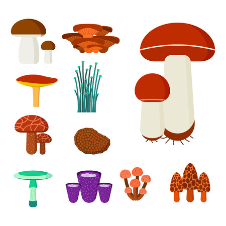 Mushrooms for cook food and poisonous nature Ilustracja