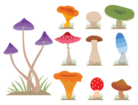 Mushrooms for cook food and poisonous nature meal vegetarian healthy autumn edible and fungus organic vegetable raw ingredient vector illustration. Imagens - 74965731