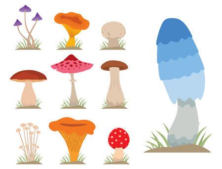 Mushrooms for cook food and poisonous nature meal vegetarian healthy autumn edible and fungus organic vegetable raw ingredient vector illustration. Imagens - 75151910