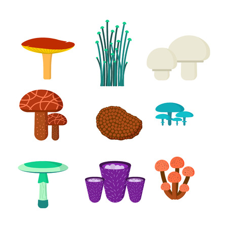 champignon: Mushrooms for cook food and poisonous nature meal vegetarian healthy autumn edible and fungus organic vegetable raw ingredient vector illustration. Illustration