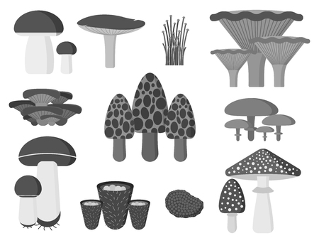 Mushrooms for cook food and poisonous nature meal vegetarian healthy autumn edible and fungus organic vegetable raw ingredient vector illustration. Иллюстрация