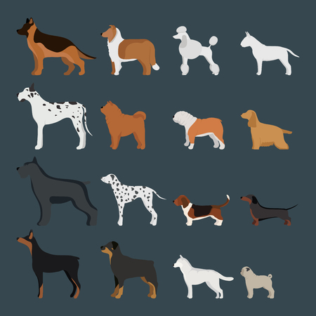 Dog breed character breed in cartoon style vector illustration.