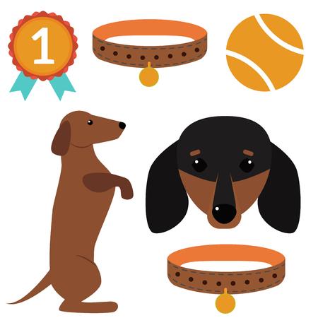 purebred: Dachshund dog playing vector illustration elements set flat style puppy domestic pet accessory. Illustration