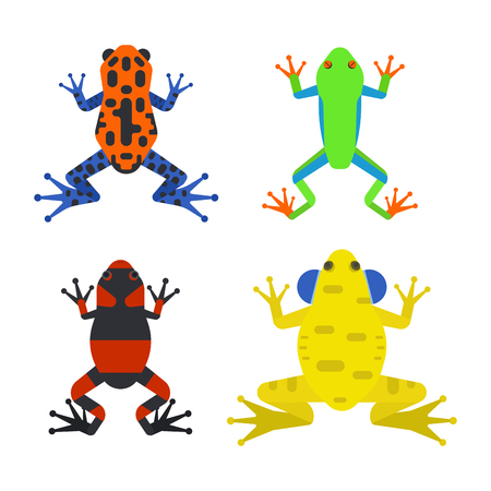 Frog cartoon tropical animal cartoon amphibian mascot character wild. Illustration