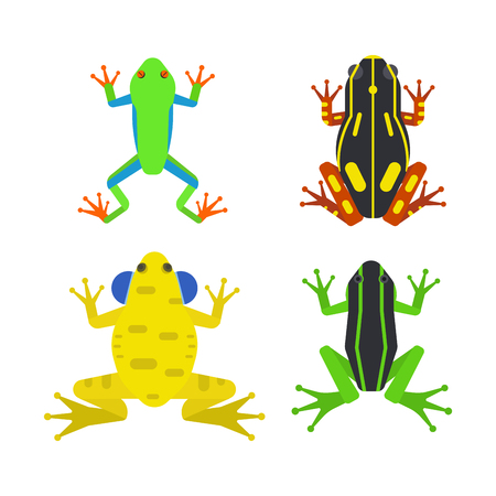 Frog cartoon tropical animal cartoon amphibian mascot character wild vector illustration. Stock Vector - 80501562