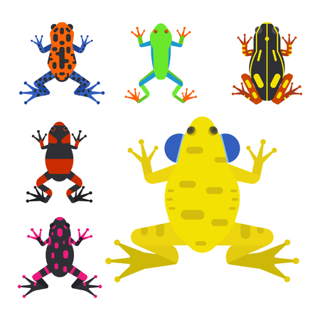 Frog cartoon tropical animal cartoon nature icon funny and isolated mascot character wild funny forest toad amphibian vector illustration. Graphic ecosystem croaking hop drawin Stock Photo