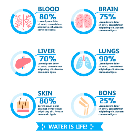 Body water drink infographics health people diet lifestyle concept brochure infochart vector illustration Illustration