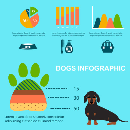 Dachshund dog playing infographic vector elements set flat style symbols puppy domestic animal illustration Stock Vector - 80816629
