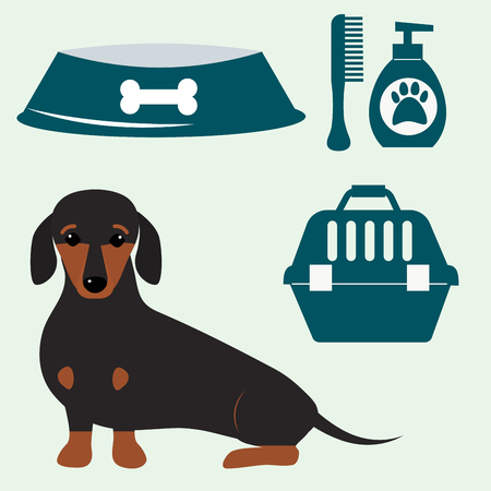 Little dachshund puppy cute brown purebred mammal sweet dog young pedigreed animal breed vector illustration