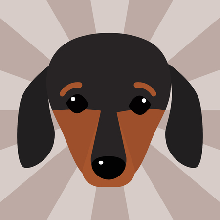 Little dachshund puppy head purebred mammal sweet dog young pedigreed animal breed vector illustration Illustration