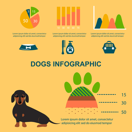 Dachshund dog playing infographic vector elements set flat style symbols puppy domestic animal illustration