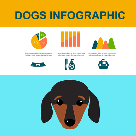 Dachshund dog playing infographic vector elements set flat style symbols puppy domestic animal illustration. Carrying toy pedigree mammal cartoon doggy canine